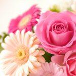 2019母の日、カーネーション以外で喜ばれるのはどんな花?値段は?