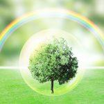市原悦子さんが選んだ樹木葬とは?メリット&デメリット、費用の相場