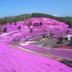 ひがしもこと芝桜公園で今年こそお花見をするぞ!連休後のお楽しみ