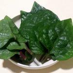 初心者でもカンタン!栄養豊富な夏野菜ツルムラサキを家庭栽培しよう!