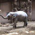 円山動物園 ゾウ舎は混雑しても見やすい!アクセス、駐車場情報も